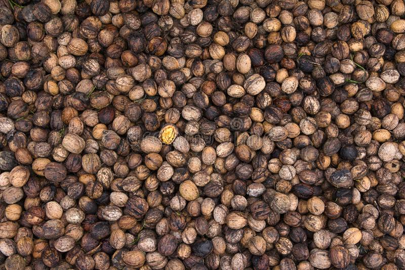 Noix fraîchement sélectionnées photographiées d'en haut photographie stock libre de droits