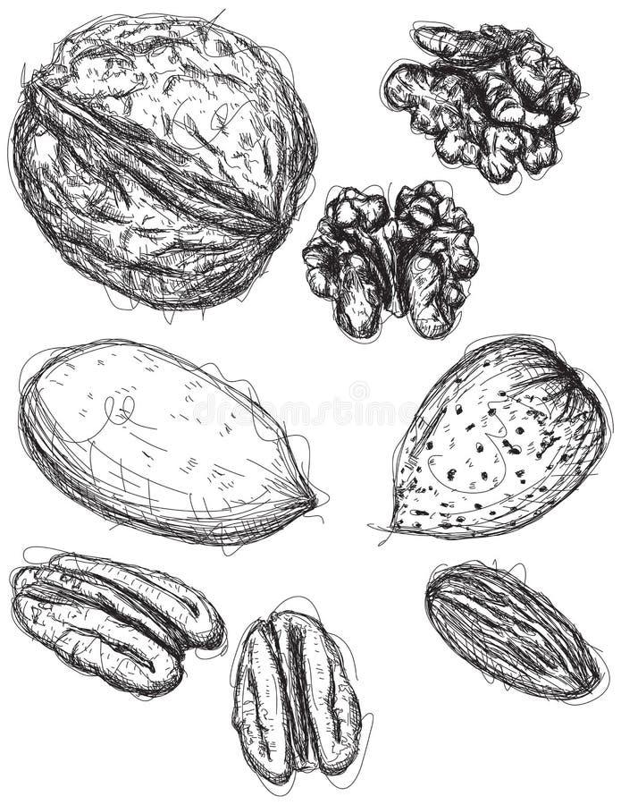 Noix, noix de pécan, et croquis d'amande illustration stock