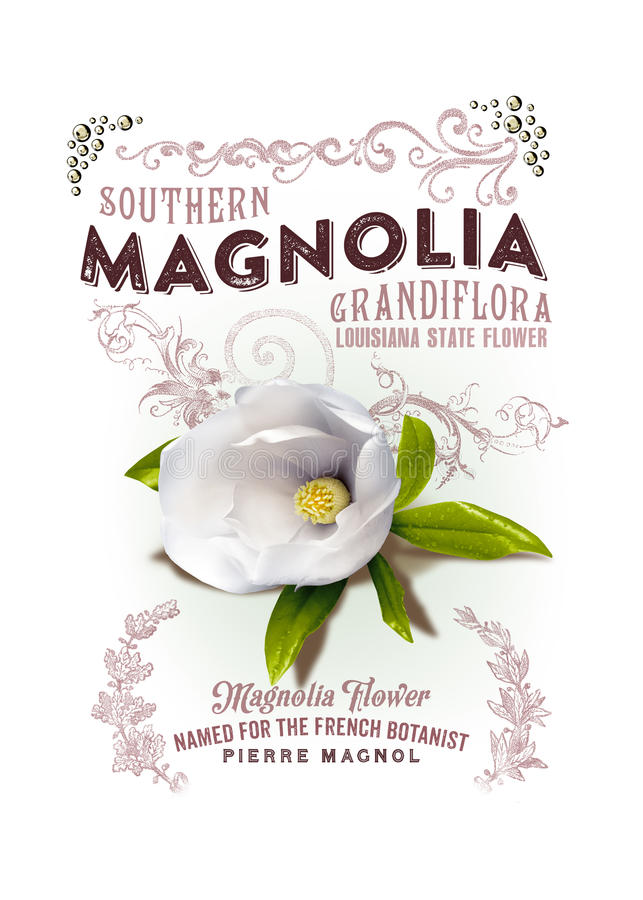NOLA Collection Louisiana Magnolia Background stock afbeeldingen