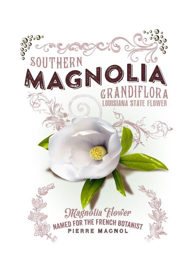 NOLA Luizjana magnolii Inkasowy tło obrazy stock