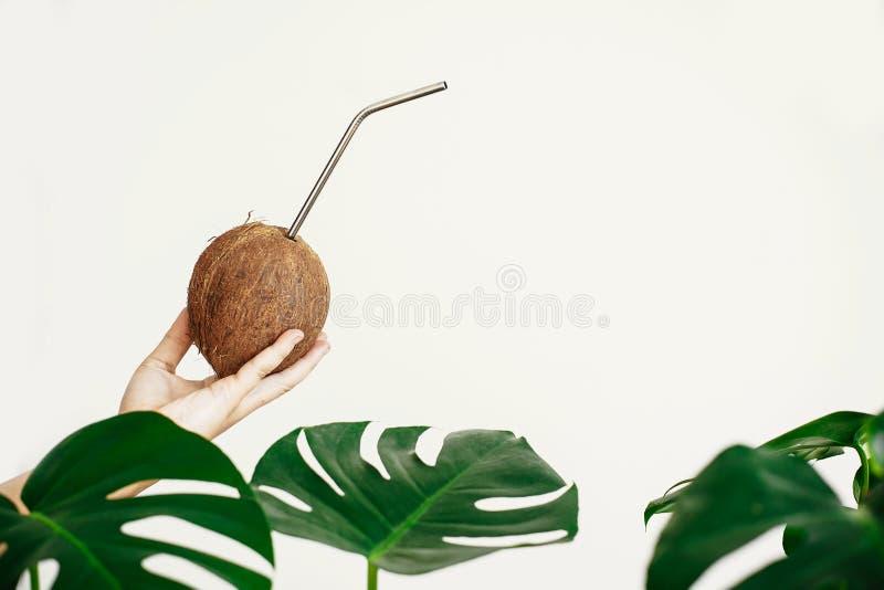 Nollavfalls Handinnehavkokosnöt med metallsugrör på vit bakgrund med gröna palmblad Begrepp för Hello sommarsemester bananen royaltyfri foto