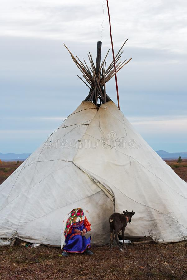 Ousewife of nenets nomad tribe in national costume repairs a clothes in front of the family chum with young reindeer. stock images