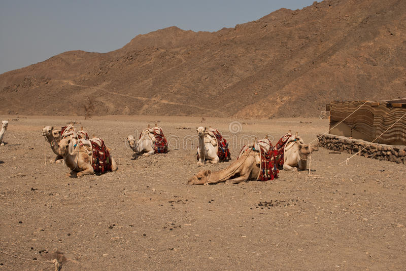 Nomad Tent And Camel In Desert Royalty Free Stock Photos