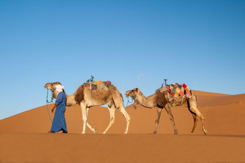 Nomade mit Dromedarwohnwagen in der Sahara-Wüste stockbild