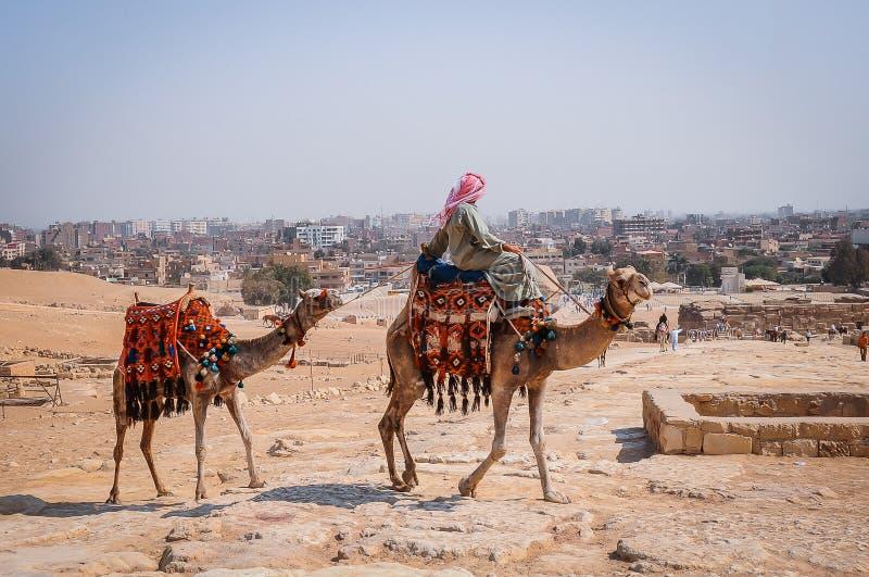 Nomade op kameel dichtbij piramides in Egyptische woestijn stock afbeeldingen