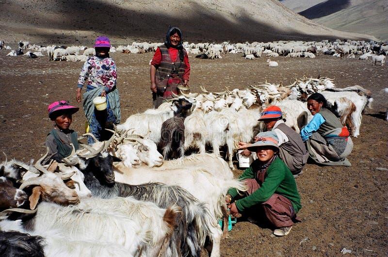 Nomader i Ladakh, Indien arkivbild