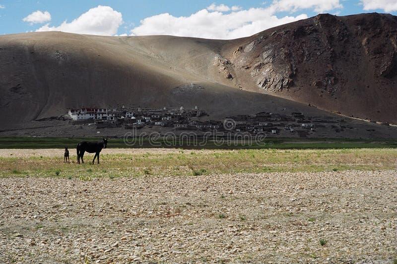 Nomader i Ladakh, Indien royaltyfria bilder