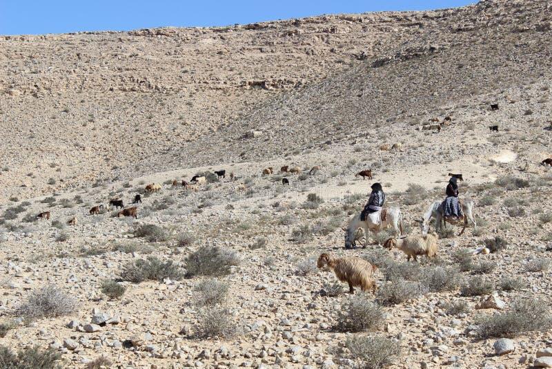 Nomades et moutons en parc national d'avdat d'Ein en Israël photos stock