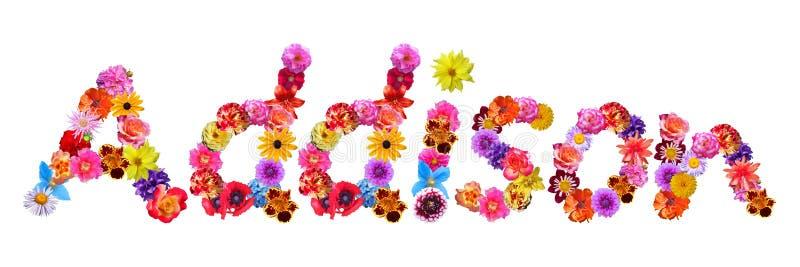 Nome Addison das flores ilustração stock