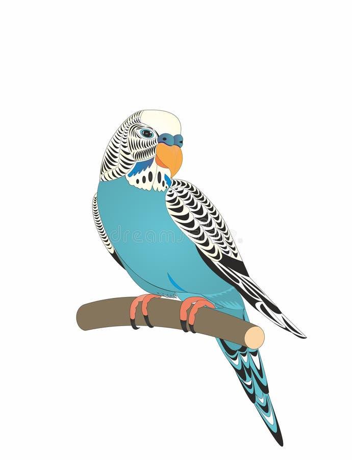 Nome ondulado Kesha do papagaio ilustração stock