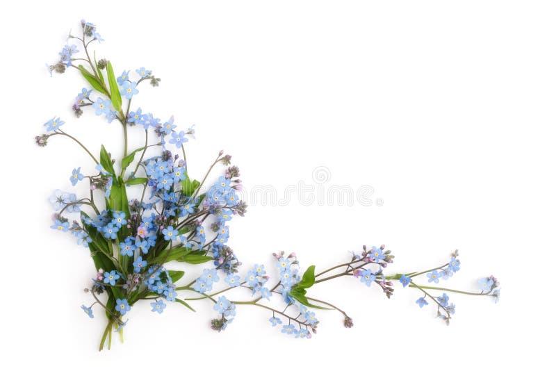 Nomeolvides (ornamento floral fotografía de archivo