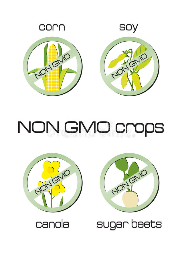 Non GMO crops set of signs: corn, soy, canola, sug. Non GMO crops set of signs for corn, soy, canola, sugar beets vector illustration