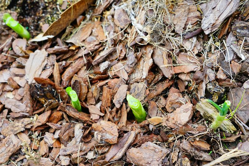 Download 葱 库存图片. 图片 包括有 生长, 现代, 徽章, 容器, 哺育, 地球, 外面, 菠萝, 森林, 天然肥料 - 103631725