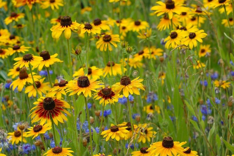Download 花 库存照片. 图片 包括有 庭院, 健美的, 黄色, 蓝色, 从事园艺 - 175336