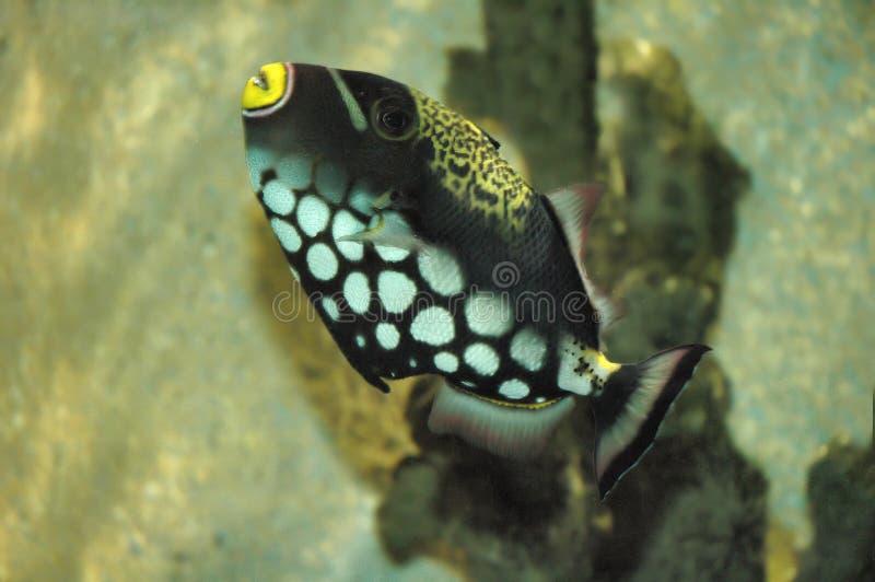 Download 鱼 库存照片. 图片 包括有 海运, 沙子, 海洋, 异乎寻常, 深度, 海草 - 180796