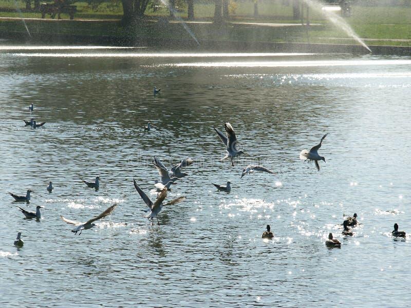Download 鸟 库存图片. 图片 包括有 喷泉, 野生生物, 河沿, 鸟舍, 行动, 海鸥, 鸽子, 飞行, 双翼飞机, 室外 - 186127