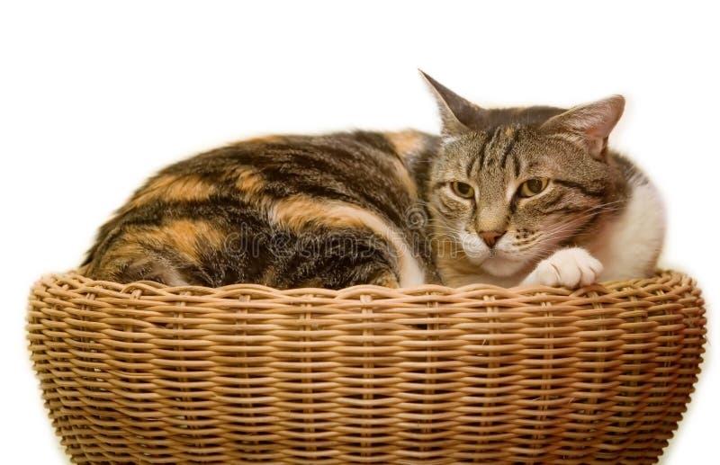 Download 猫 库存照片. 图片 包括有 查出, 宠物, 虚拟, bataan, 哺乳动物, 毛皮, 柳条, 口鼻部, 愤怒 - 3659724