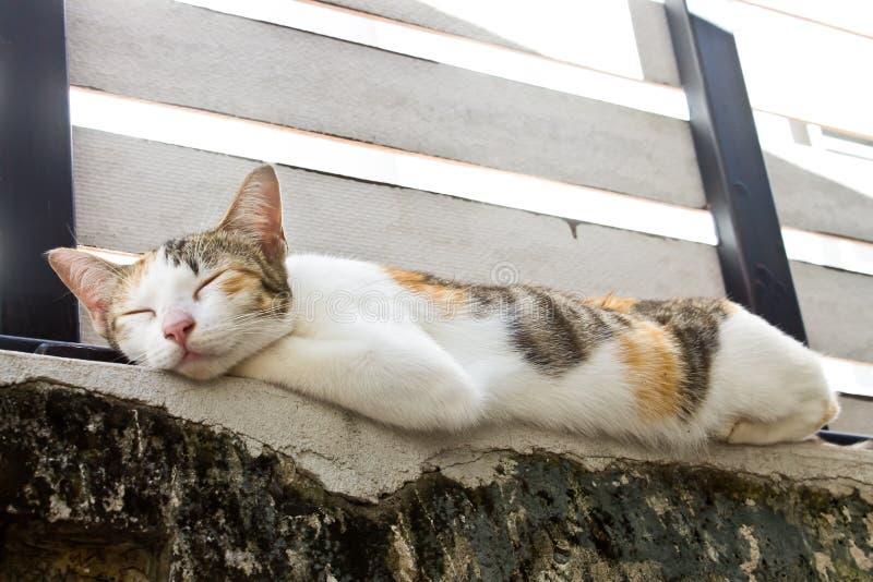 Download 猫 库存图片. 图片 包括有 全部赌注, 敌意, 逗人喜爱, 小猫, 哺乳动物, 休眠, 宠物 - 59111947