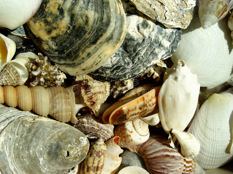 Download 壳 库存照片. 图片 包括有 敌意, 经纪, 淡菜, 纹理, 贝壳, 感激的, 关闭, 特写镜头, 海鲜, browne - 59136