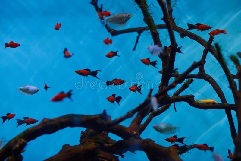 Download 鱼 库存照片. 图片 包括有 菲律宾, 印度尼西亚, 热带, 飞翅, 游泳, 茴香, 印第安语, 海运, 水族馆 - 62528156