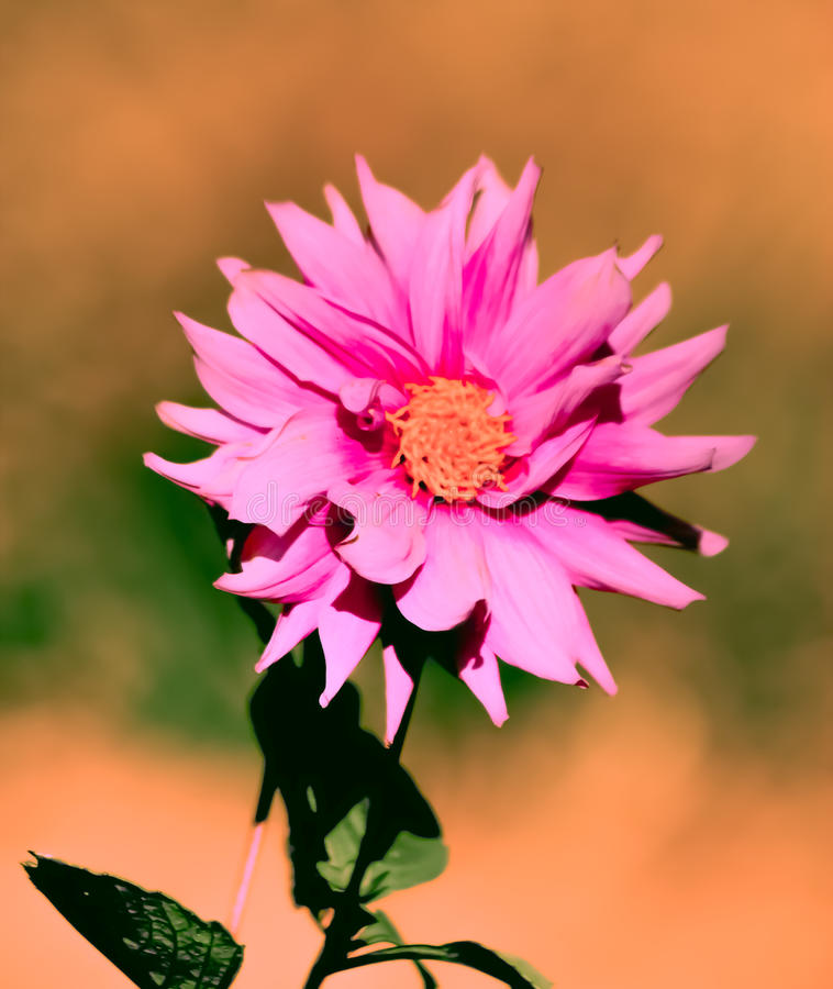 Download 花! 库存图片. 图片 包括有 可爱, 采取, 的treadled, 夜间, 尼泊尔, 红色, beautifuler - 62528697
