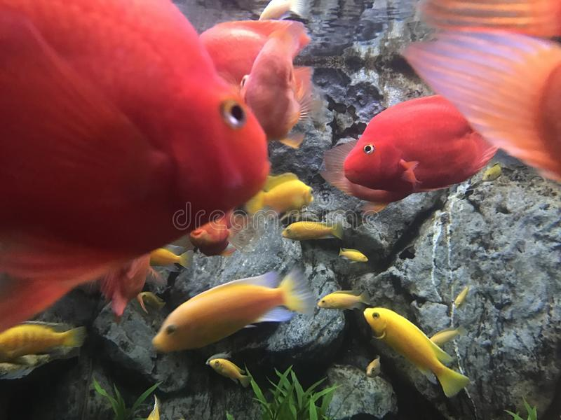 鱼水地狱自然秀丽