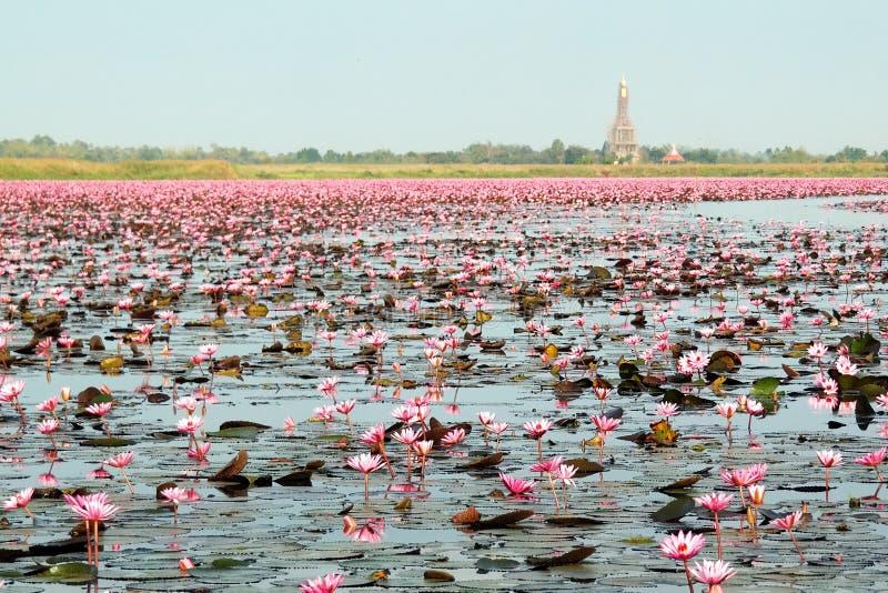 Nong Harn Lake, Udon Thani imagens de stock