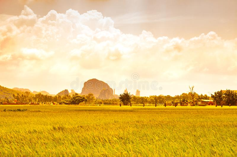 Nong thon royalty free stock images