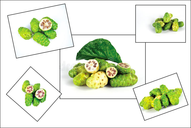 Noni stock photos