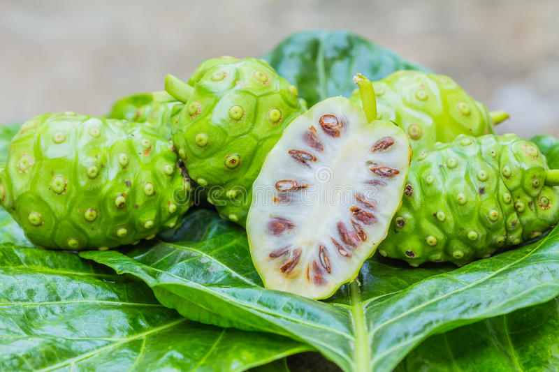Noni stock photography