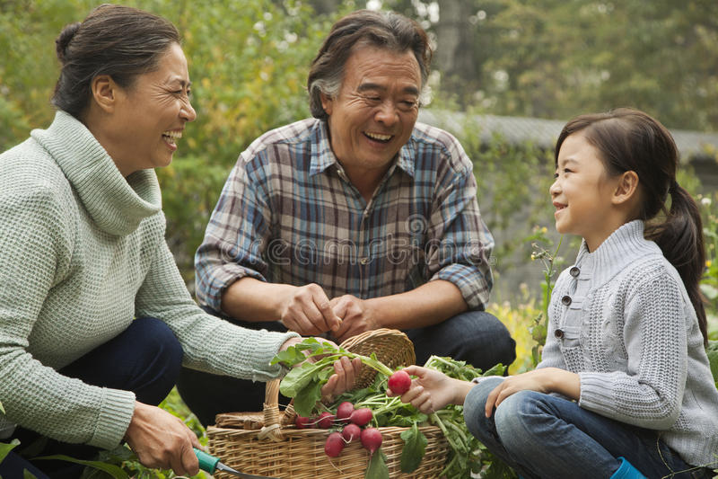 Nonni e nipote sorridenti nelle verdure di raccolto del giardino fotografie stock libere da diritti