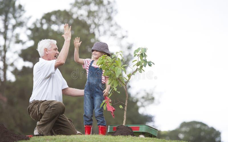 Nonno e bambino che piantano albero nell'unità della famiglia del parco fotografia stock
