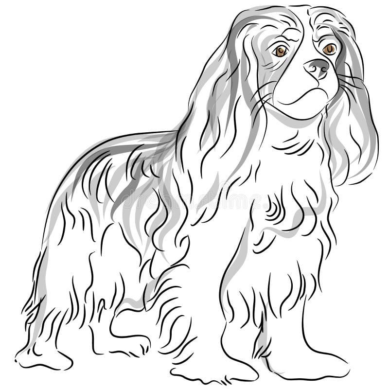 nonszalancki Charles rysunkowy królewiątka spaniel ilustracji