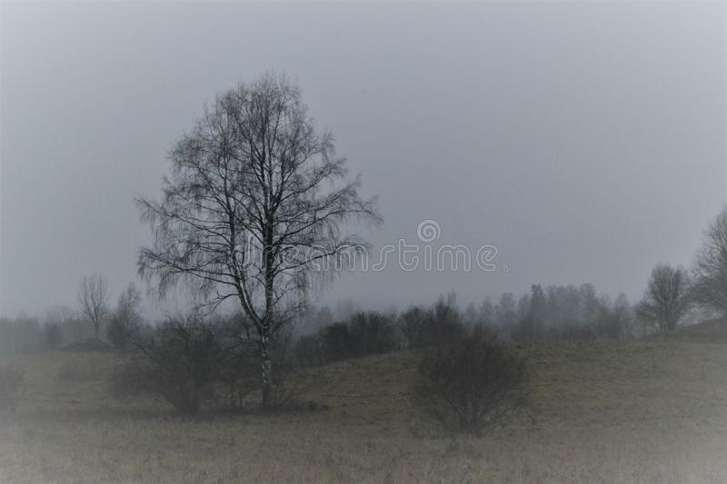 A lone tree is foggy. royalty free stock photos