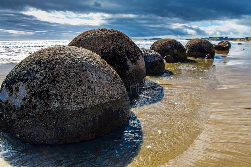 Noon. The Pacific ocean tide begins. Row of huge round boulders Moeraki on a sandy beach. New Zealand. The concept of ecological, exotic and phototourism royalty free stock photo