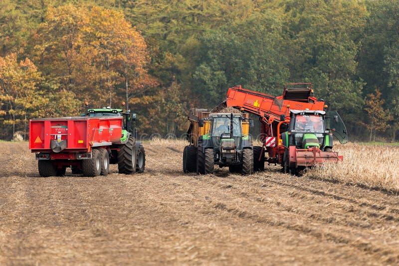 Harvesting potatoes on a field stock photos