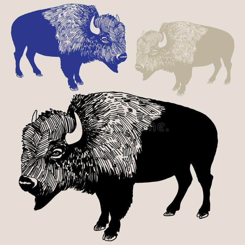 Noordamerikaanse Bizon of Buffels stock illustratie