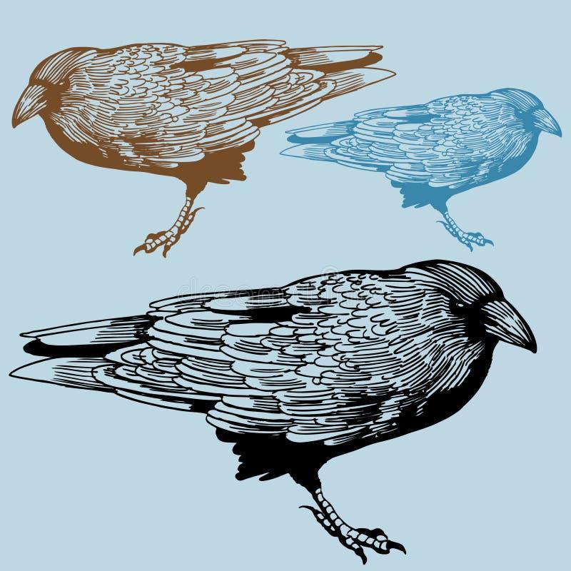 Noordamerikaanse Kraai vector illustratie