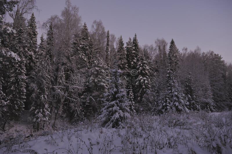 Noordelijk bos stock afbeeldingen