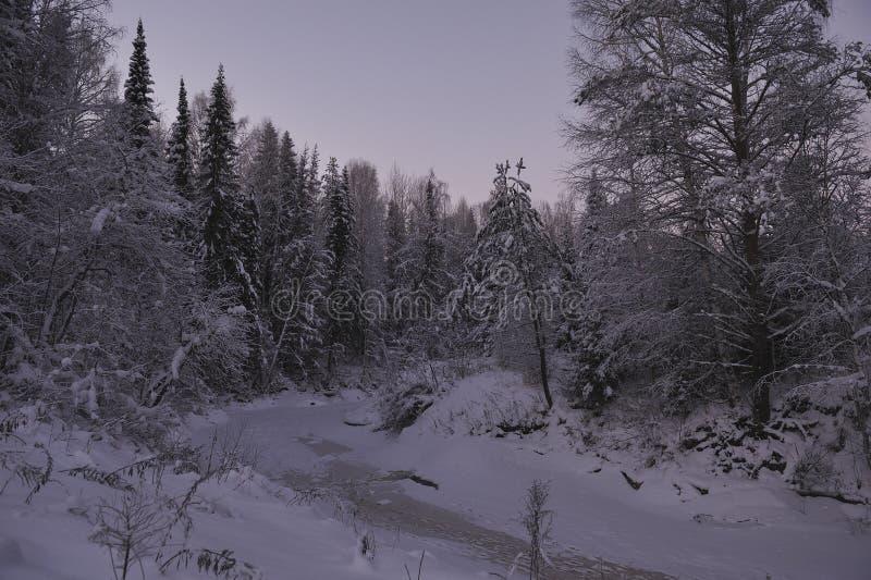 Noordelijk bos stock fotografie