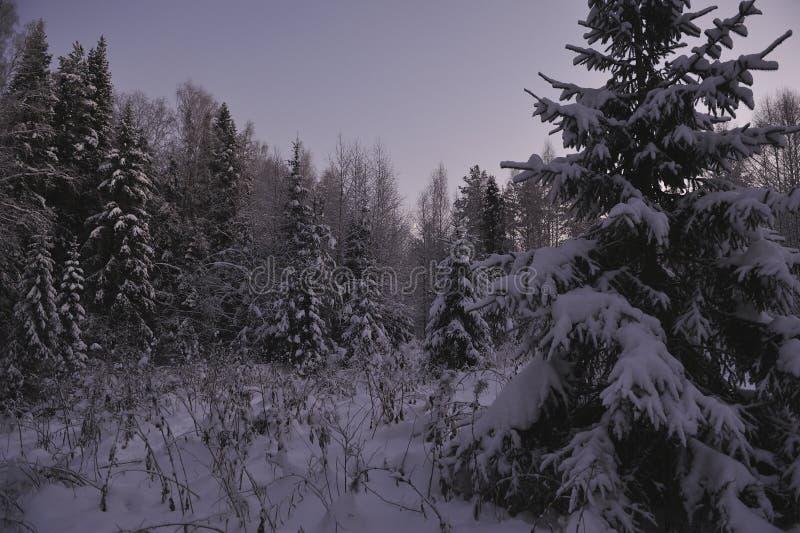 Noordelijk bos royalty-vrije stock foto's