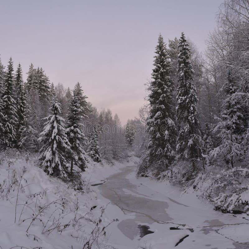 Noordelijk bos royalty-vrije stock afbeelding