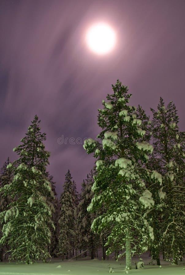 Noordelijk de winter bosmaanlicht royalty-vrije stock fotografie