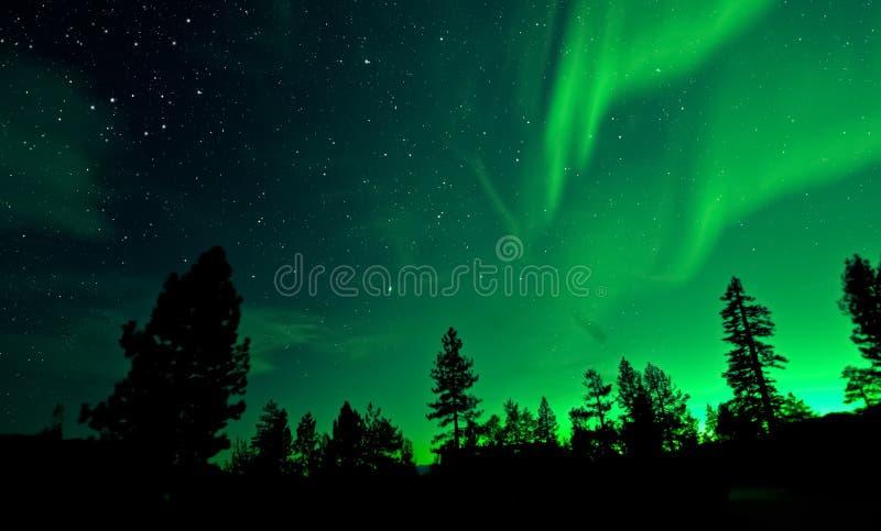 Noordelijk Lichtenaurora borealis over bomen stock foto