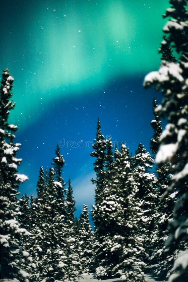 Noordelijke Lichten, borealis van de Dageraad en de winterbos royalty-vrije stock foto