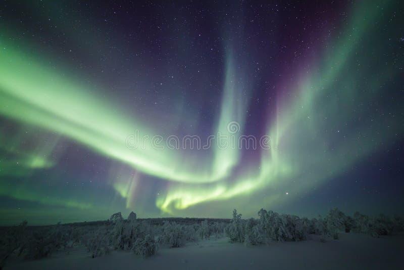Noordelijke Lichten boven het kleine bos van berkbomen royalty-vrije stock afbeeldingen
