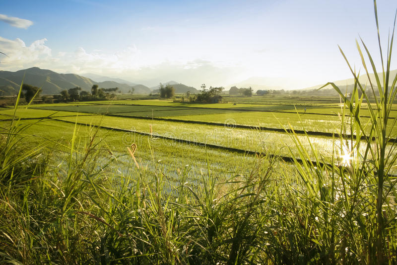 Noordelijke luzon van padievelden de Filippijnen royalty-vrije stock foto's