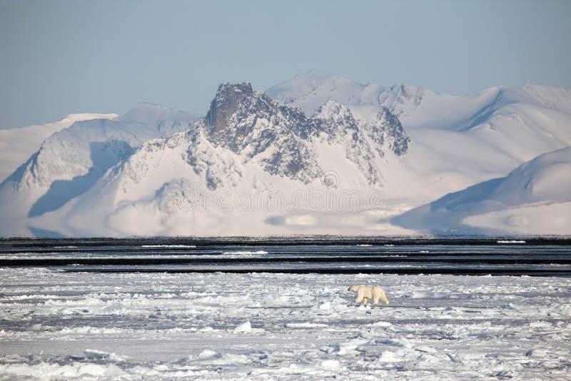 Noordpool landschap met ijsbeer stock foto's