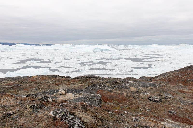 Noordpoollandschap in Groenland met ijsbergen royalty-vrije stock foto's