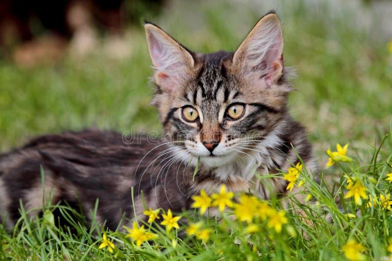 Noors boskattenkatje met kleine gele bloemen stock afbeelding